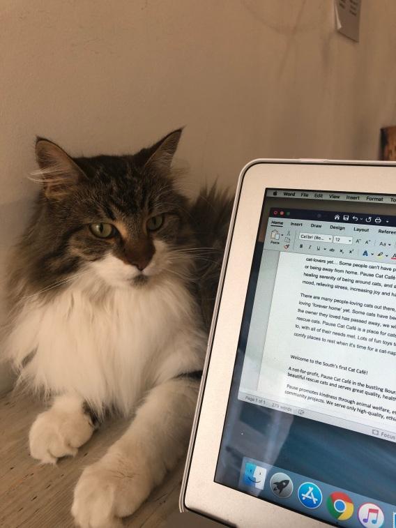 Marijke sat next to my laptop