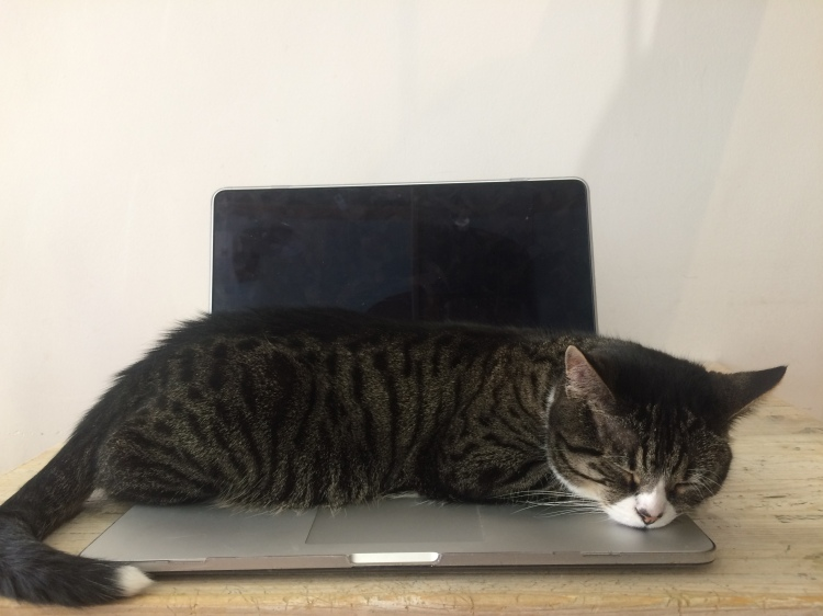 Petrus sleeping on a laptop